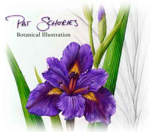 This site contains botanical illustrations.